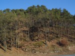 Untangling Bioenergy Policy in Forest Landscapes